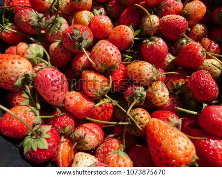 Beautiful and red fresh strawberry for trader or business, Close up a lot of strawberries from the farm on the market and on korea newspaper background for concept design and decorative workings