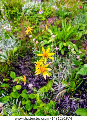Beautiful and vibrant wildflowers in Banff National Park. #1491261974