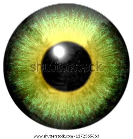 Stock Photo Beautiful animal yellow green predator aligator eyeball, isolated white background, black pupil, great viewing, 3d eye texture, green yellow round