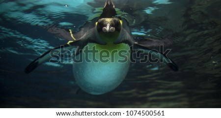 Beautiful aqua background: the arctic penguin lies on the water, the photo is from below. Light reflected on the water surface reflects the penguin mirror