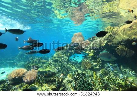 beautiful aquarium in Gold Coast, Australia
