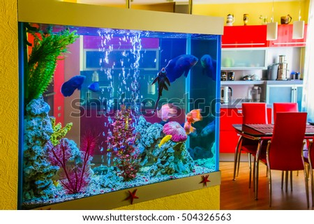 Shutterstock Beautiful aquarium with colorful fish in a room to modern apartment