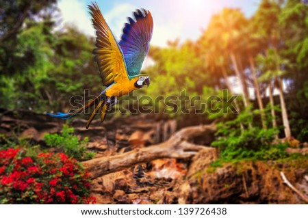 Stock Photo Beautiful Ara parrot on tropical forest background