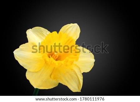 Beautiful aroma fresh flower on black background.