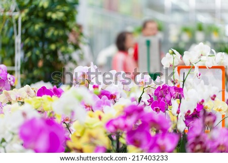 Beautiful arrangement of plants in a flower shop. Flowers for sale at a flower market. Indoor.