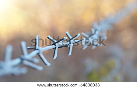 Beautiful artistic background with barbed wire. The wire is covered with frost. Late autumn.