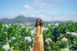 Beautiful Asian Woman in yellow dress walk in The Hydrangea Flowers Garden.