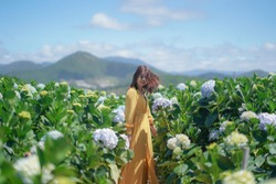 Beautiful Asian Woman in yellow dress walk in The Hydrangea Flowers Garden.