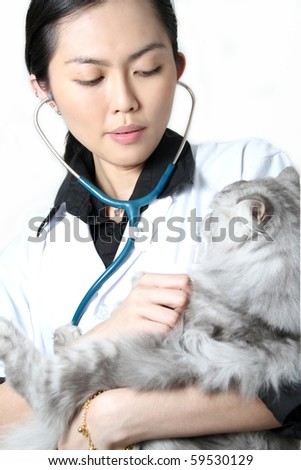 Beautiful Asian woman Veterinarian examining a cat
