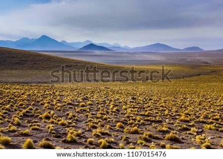 Beautiful Atacama desert #1107015476