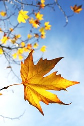 Beautiful autum leaves against sky