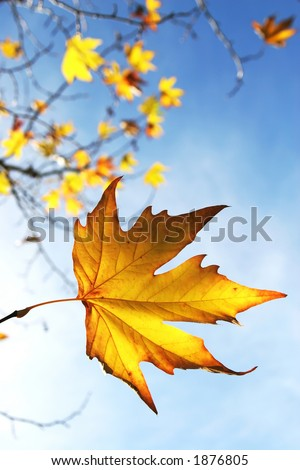 Beautiful autum leaves against sky