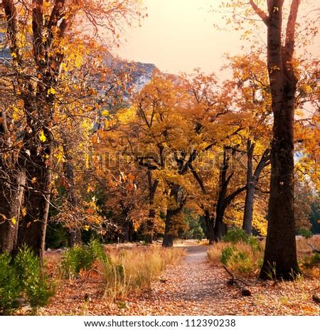 Beautiful autumn alley - stock photo