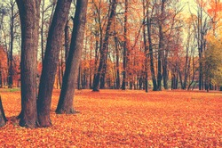 Beautiful autumn calm nature landscape.Sunny autumn scene with land covered by orange and red leaves in empty park.Concept of beauty of autumn nature.Vintage colours.