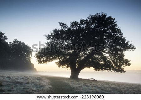 Beautiful Autumn Fall sunrise foggy landscape over frost covered field and forest