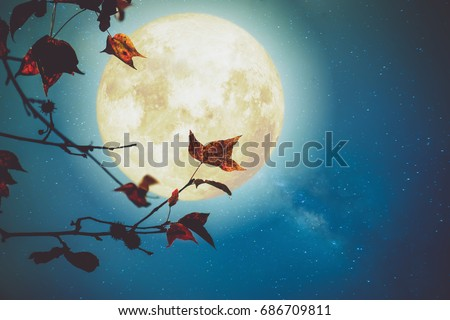 Beautiful autumn fantasy - maple tree in fall season and full moon with milky way star in night skies background. Retro style artwork with vintage color tone #686709811