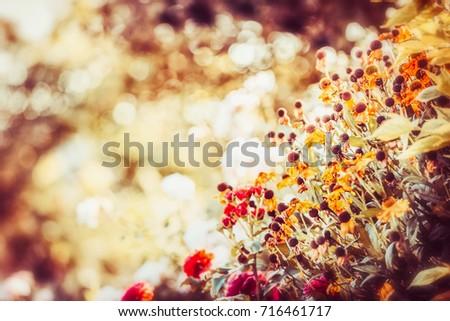 beautiful autumn flowers garden ...