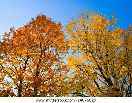 Beautiful autumn foliage on trees