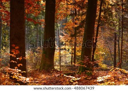 Beautiful autumn forest - Shutterstock ID 488067439
