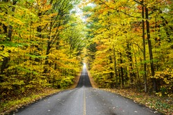 Beautiful autumn forest endless road
