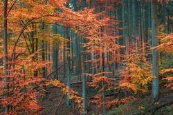 Beautiful autumn forest. Fall colors vibrant nature palette.