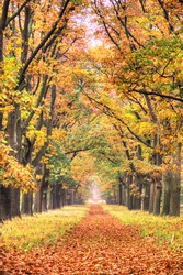Beautiful autumn forest in national park 'De hoge Veluwe' in the Netherlands. HDR