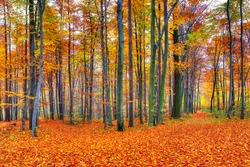 Beautiful autumn forest landscape