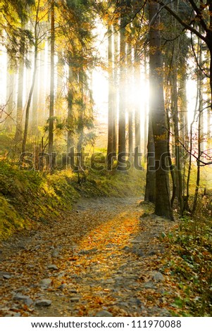 Beautiful autumn forest mountain path at sunset vertical composition