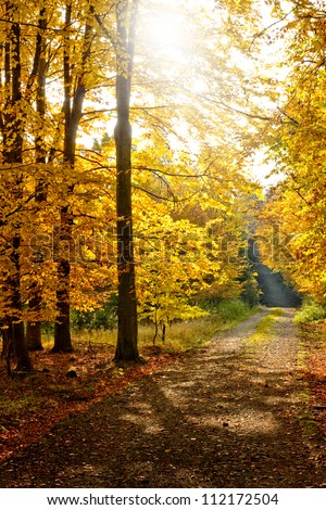 Beautiful autumn forest sun shining through trees illuminating the path