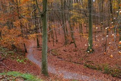 Beautiful autumn forest with footpath among Fagus sylvatica beech trees with deciduous autumnal foliage.