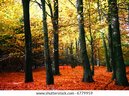 Beautiful autumn forest with glowing leaves and bright canopy
