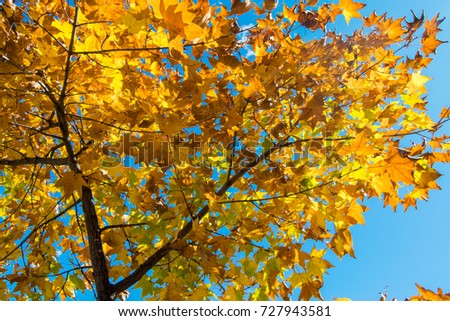 Beautiful autumn forest with yellow and red trees at sunset #727943581