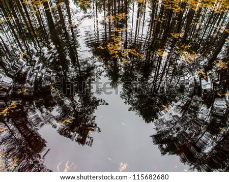 Beautiful autumn in the forest. Reflection of pines in an open bog and ripples in the water. - stock photo