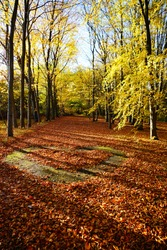 Beautiful autumn landscape - autumn alley  - golden autumn in park