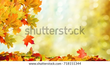 Beautiful autumn landscape. Colorful foliage in the park. Falling leaves natural background  #718151344