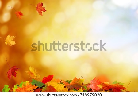 Beautiful autumn landscape. Colorful foliage in the park. Falling leaves natural background #718979020