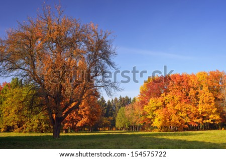 Beautiful autumn landscape in the park. Saturated colors of the autumn forest - stock photo
