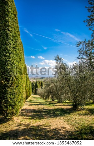 Beautiful autumn landscape in Tuscany.  Tuscany, Italy  #1355467052