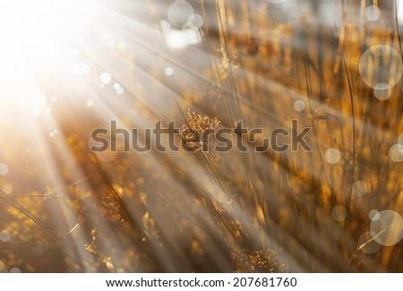 Beautiful autumn landscape, orange green grass, bright yellow sun light, gorgeous warm weather, fall season concept