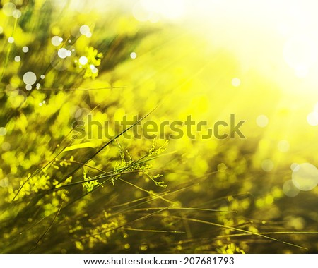 Beautiful autumn landscape, orange green grass, bright yellow sun light, gorgeous warm weather, fall season concept