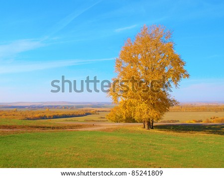 Beautiful autumn landscape with big tree