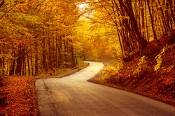 Beautiful autumn landscape with fallen dry red leaves, road through the forest and yellow trees