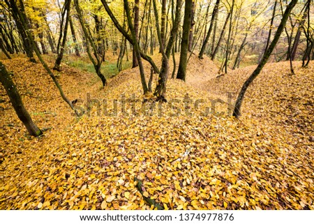 Beautiful autumn landscape with yellow trees during fall foliage, falling foliage, natural autumn background #1374977876