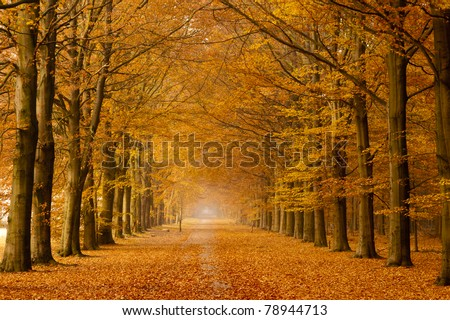 Beautiful autumn lane in the forest