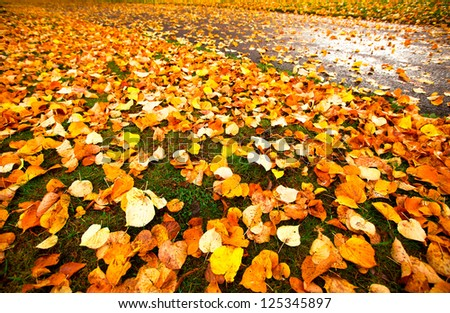 Beautiful autumn leaves for background.
