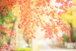 Beautiful autumn leaves in Kyoto, Japan