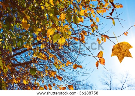 Beautiful autumn leaves in the blue sky