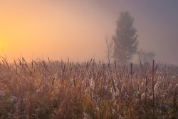 Beautiful autumn misty sunrise landscape. Foggy morning at the scenic swamp with fluffy reeds.