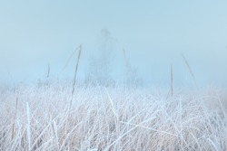 Beautiful autumn misty sunrise landscape. November foggy morning and rime on a plants at scenic high grass meadow.