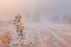 Beautiful autumn misty sunrise landscape with rural road. November foggy morning and hoary frost on the grass at scenic copse.